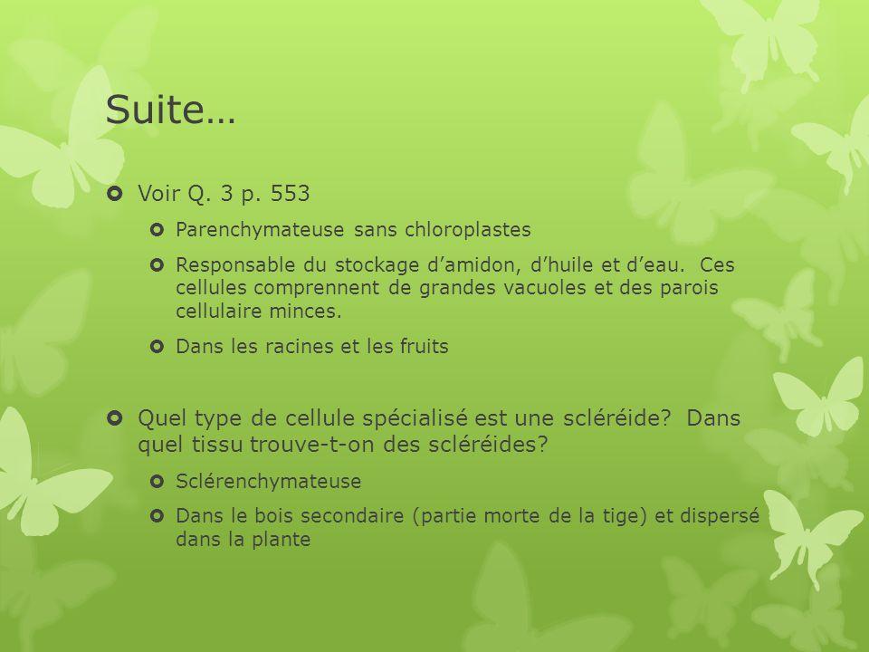 Suite… Voir Q. 3 p. 553. Parenchymateuse sans chloroplastes.
