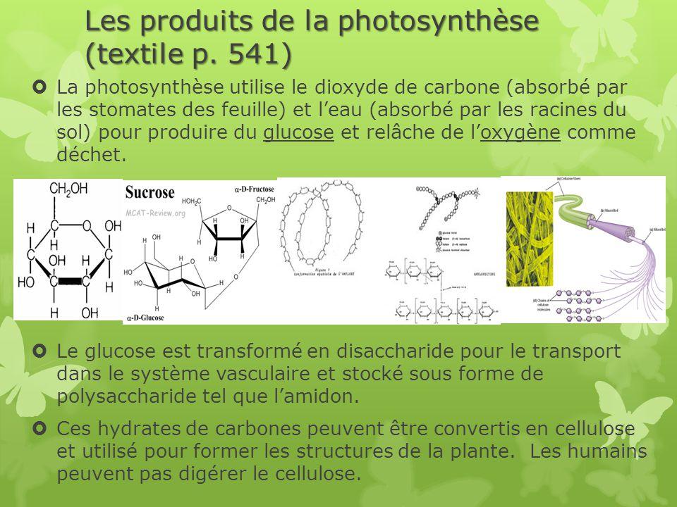 Les produits de la photosynthèse (textile p. 541)