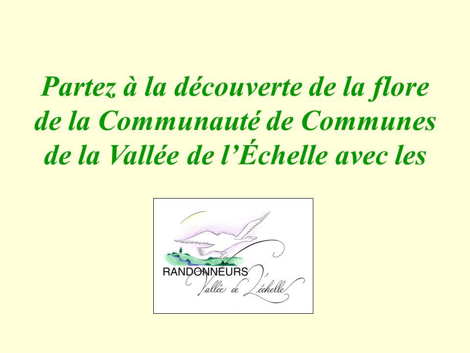 Partez à la découverte de la flore de la Communauté de Communes de la Vallée de l'Échelle avec les