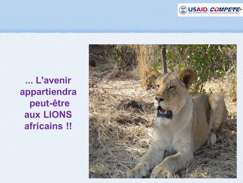 ... L avenir appartiendra peut-être aux LIONS africains !!