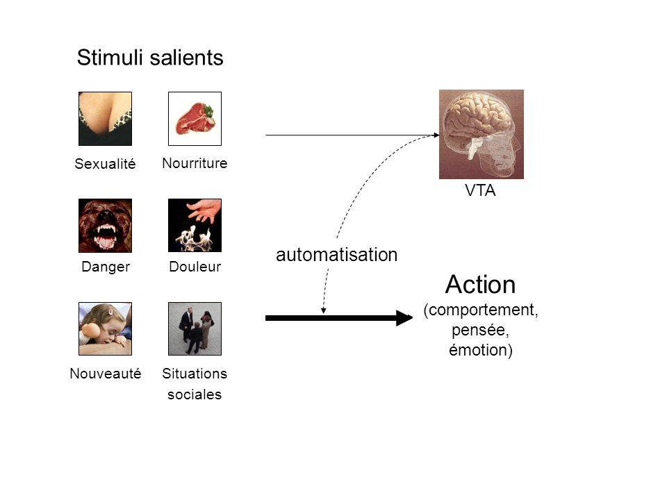 Action Stimuli salients automatisation VTA (comportement, pensée,
