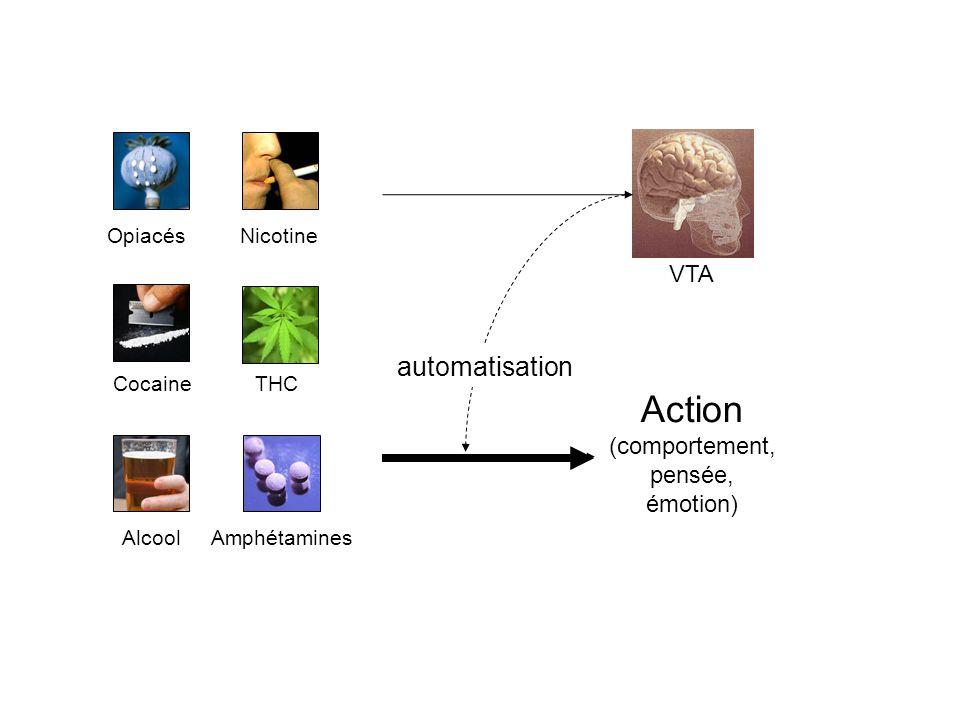 Action automatisation VTA (comportement, pensée, émotion) Opiacés