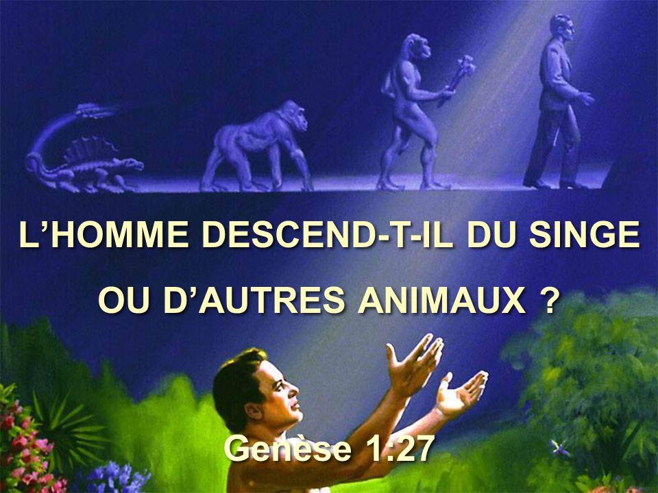 L'HOMME DESCEND-T-IL DU SINGE