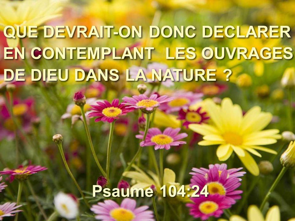 QUE DEVRAIT-ON DONC DECLARER EN CONTEMPLANT LES OUVRAGES DE DIEU DANS LA NATURE