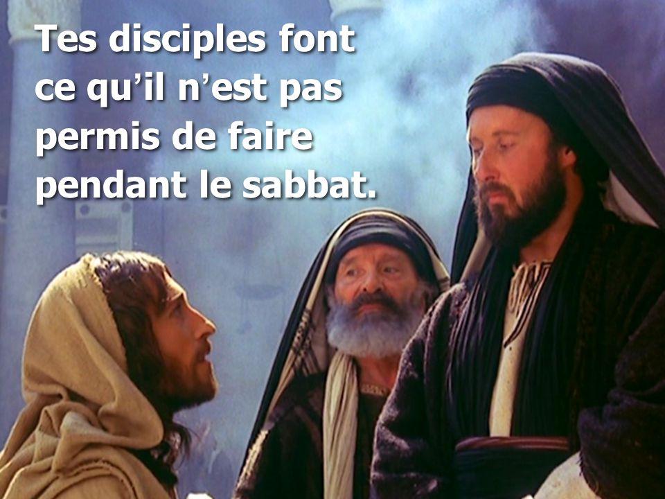 Tes disciples font ce qu'il n'est pas permis de faire pendant le sabbat.