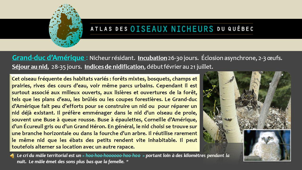 Grand-duc d'Amérique : Nicheur résidant. Incubation 26-30 jours