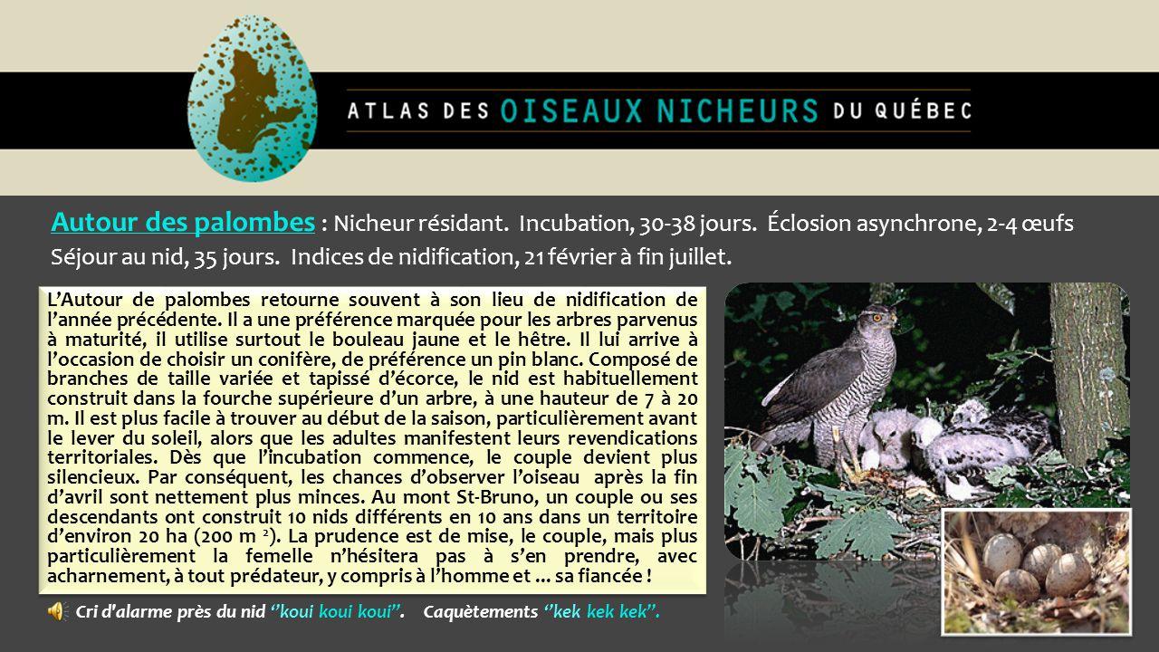 Autour des palombes : Nicheur résidant. Incubation, 30-38 jours