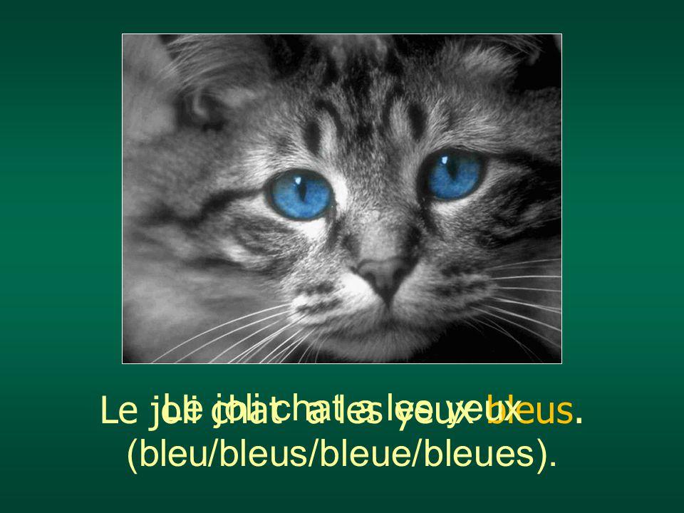 Le joli chat a les yeux (bleu/bleus/bleue/bleues).