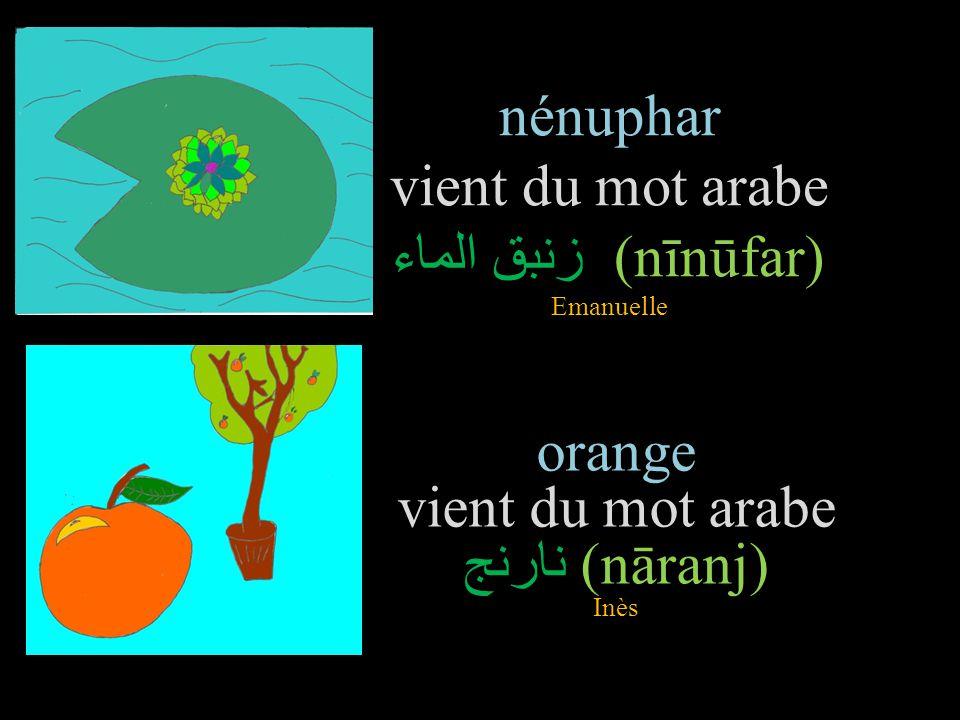nénuphar vient du mot arabe زنبق الماء (nīnūfar) Emanuelle