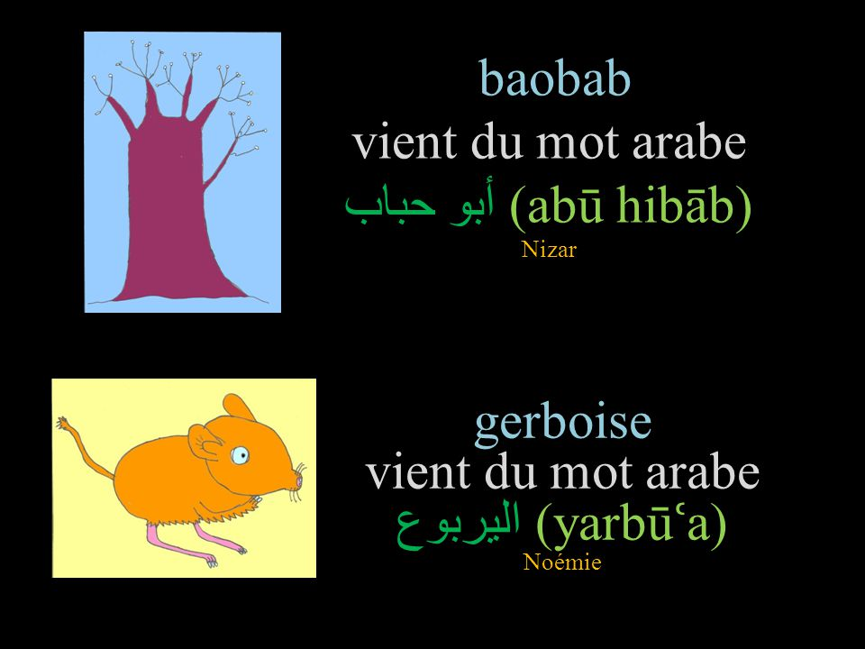 baobab vient du mot arabe أبو حباب(abū hibāb) Nizar
