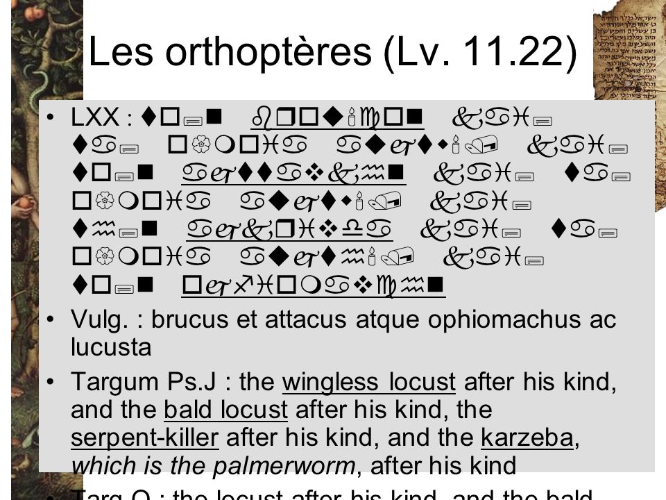 Les orthoptères (Lv. 11.22)