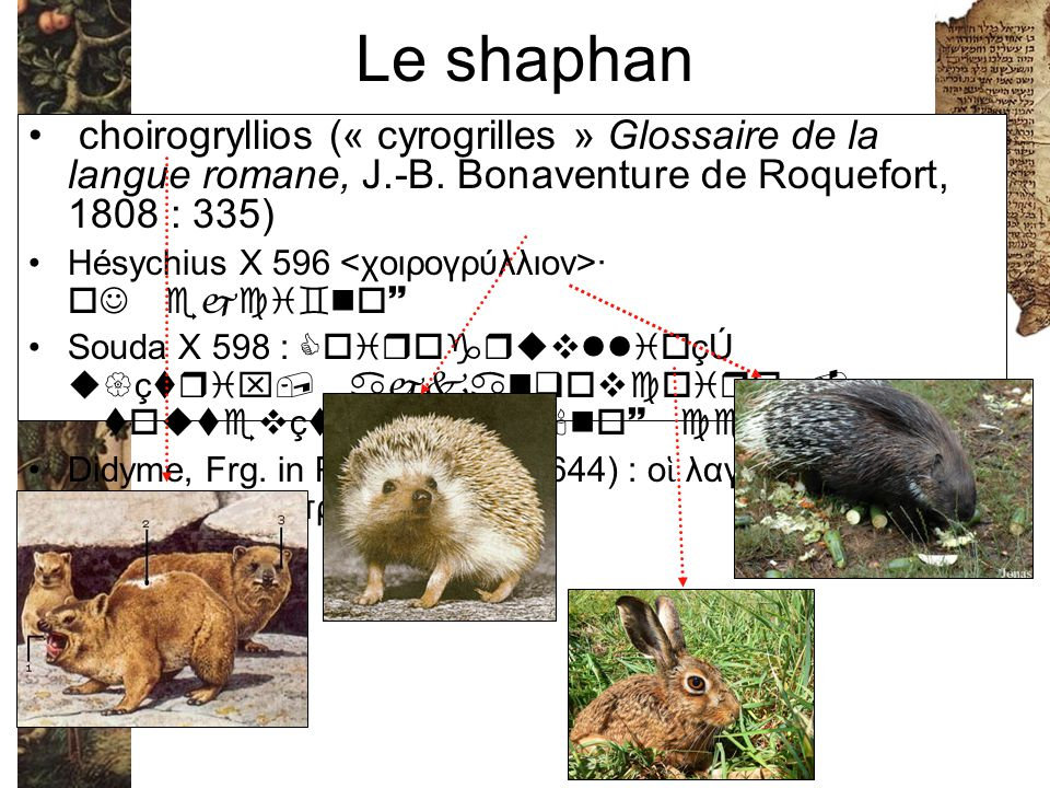 Le shaphan choirogryllios (« cyrogrilles » Glossaire de la langue romane, J.-B. Bonaventure de Roquefort, 1808 : 335)