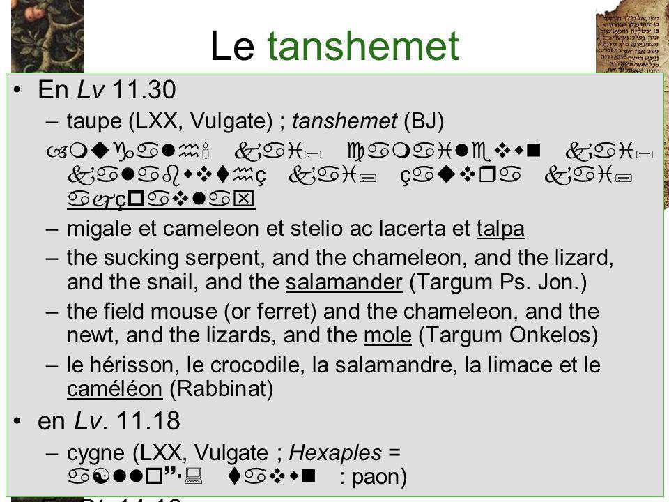 Le tanshemet En Lv 11.30 en Lv. 11.18 En Dt. 14.16
