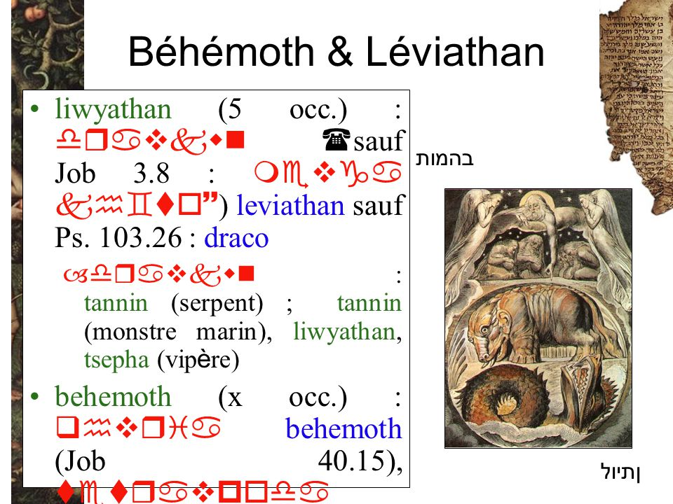 Béhémoth & Léviathan liwyathan (5 occ.) : dravkwn (sauf Job 3.8 : mevga kh`to~) leviathan sauf Ps. 103.26 : draco.