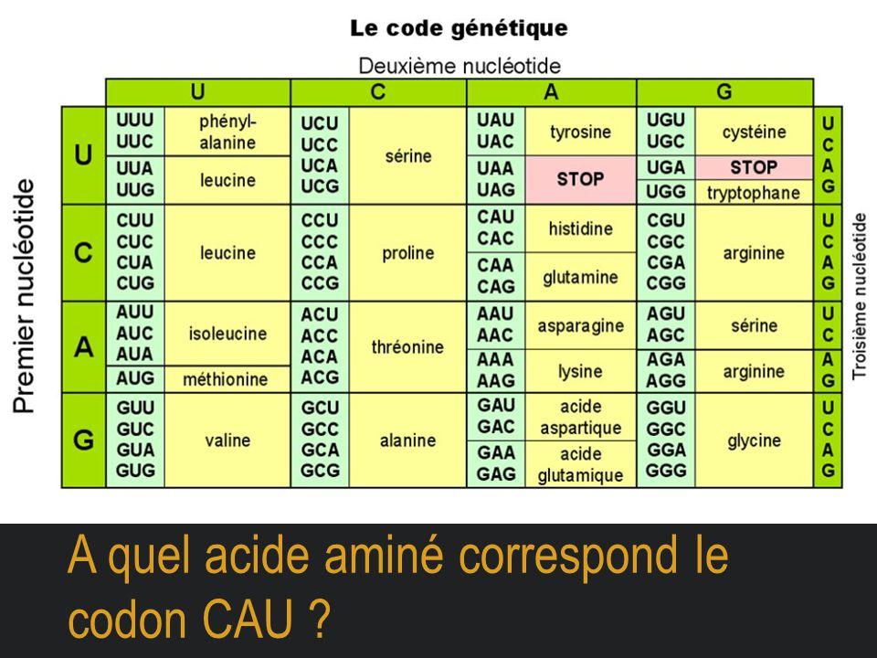 A quel acide aminé correspond le codon CAU