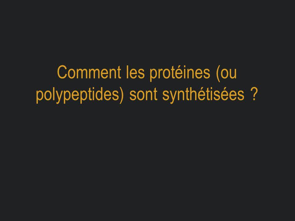 Comment les protéines (ou polypeptides) sont synthétisées