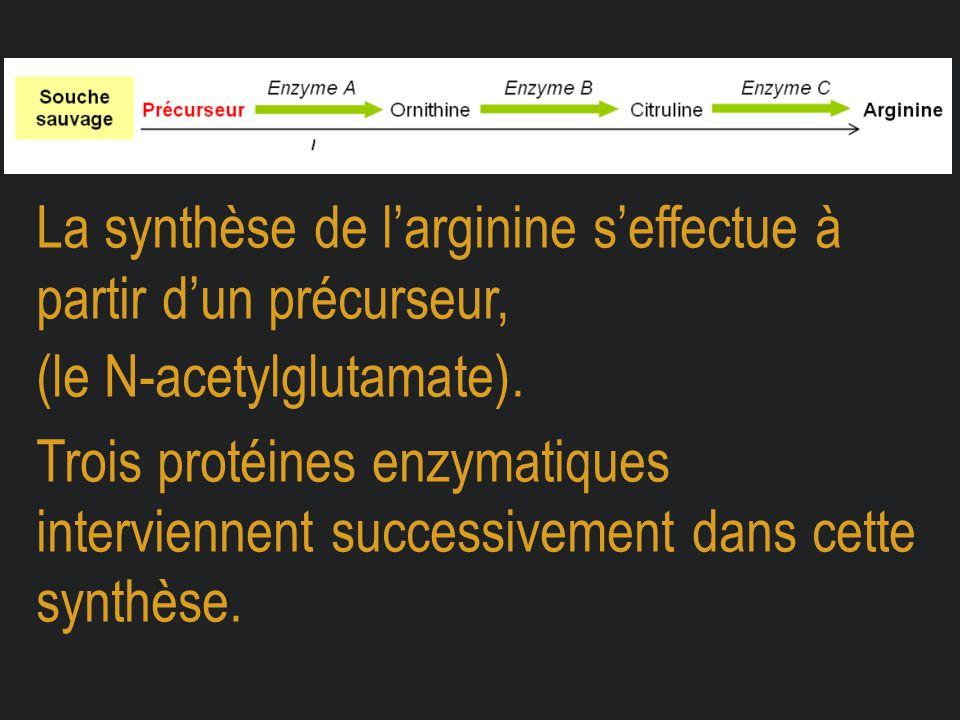 La synthèse de l'arginine s'effectue à partir d'un précurseur,