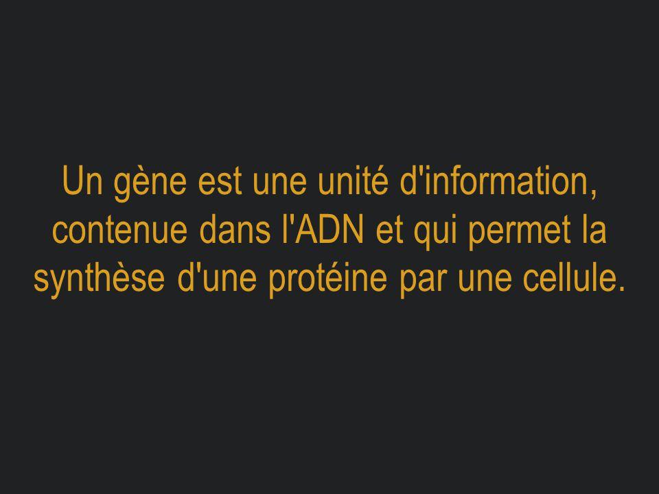 Un gène est une unité d information, contenue dans l ADN et qui permet la synthèse d une protéine par une cellule.