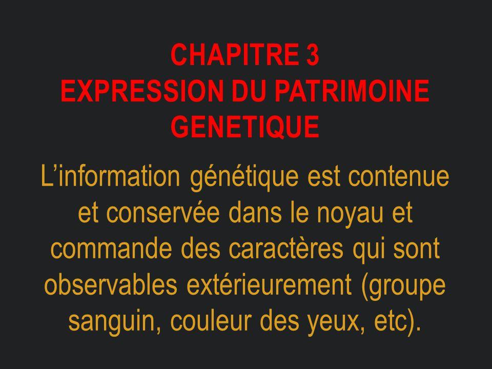 Chapitre 3 expression du patrimoine genetique