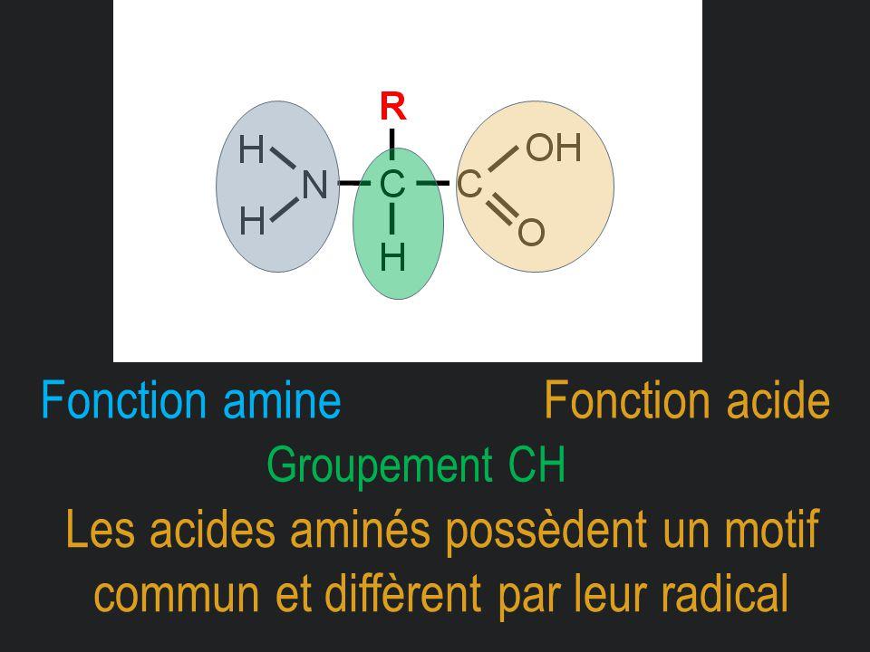 Fonction amine Fonction acide