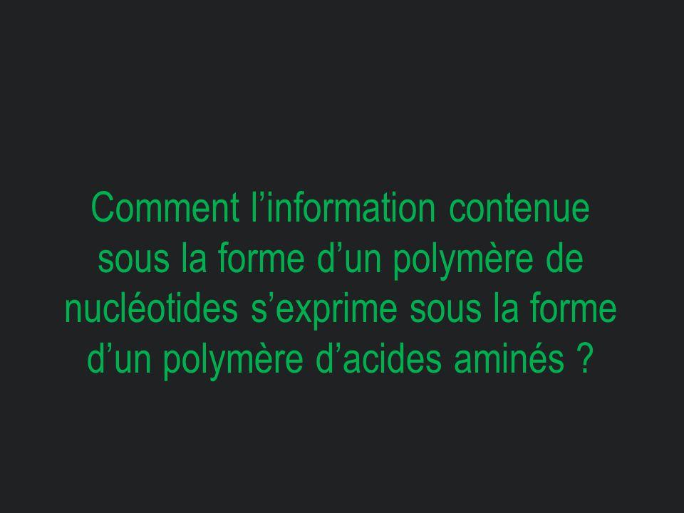 Comment l'information contenue sous la forme d'un polymère de nucléotides s'exprime sous la forme d'un polymère d'acides aminés