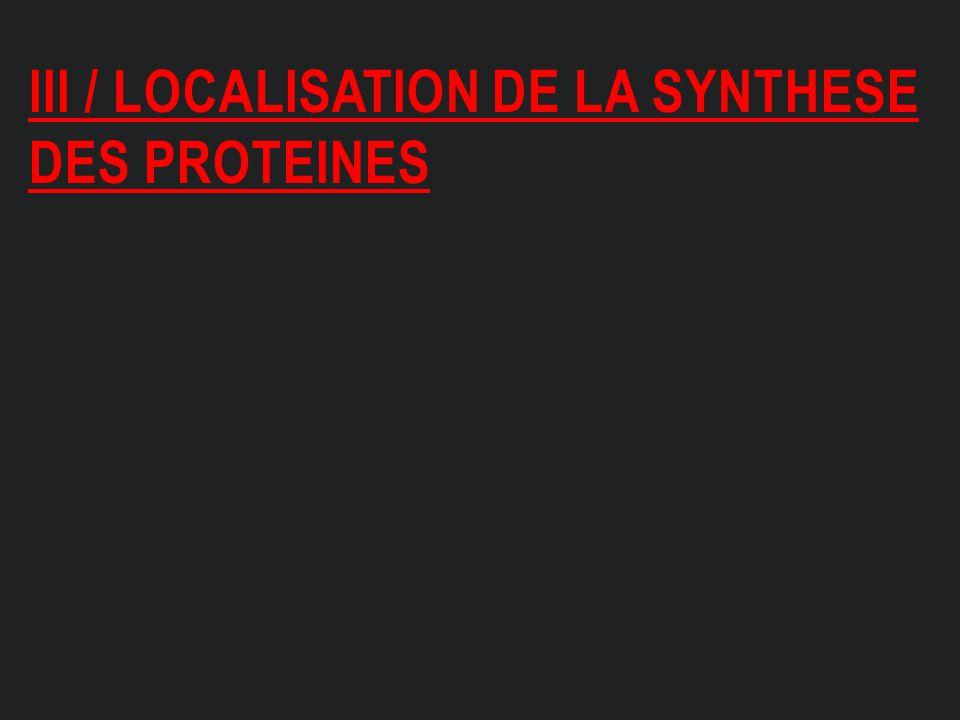 Iii / localisation de la synthese des proteines