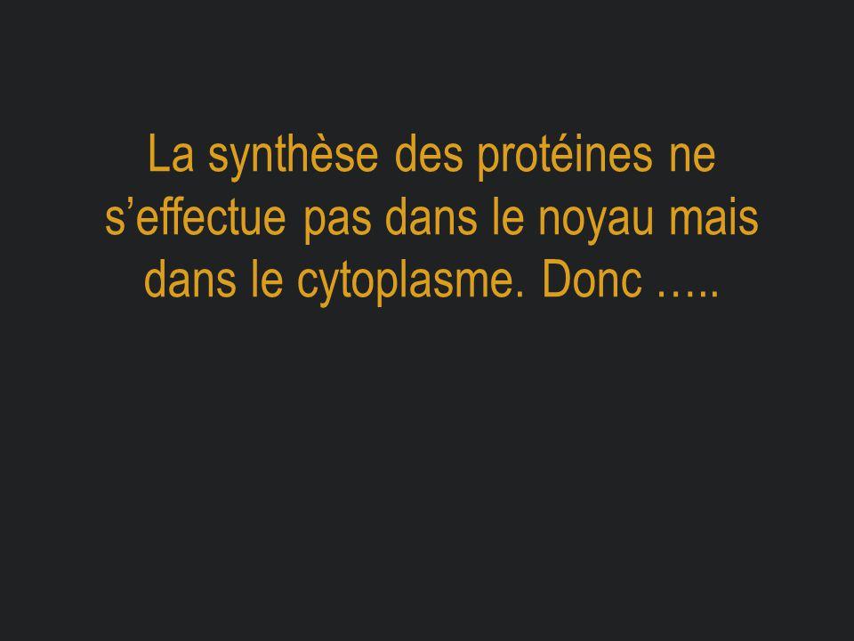 La synthèse des protéines ne s'effectue pas dans le noyau mais dans le cytoplasme. Donc …..