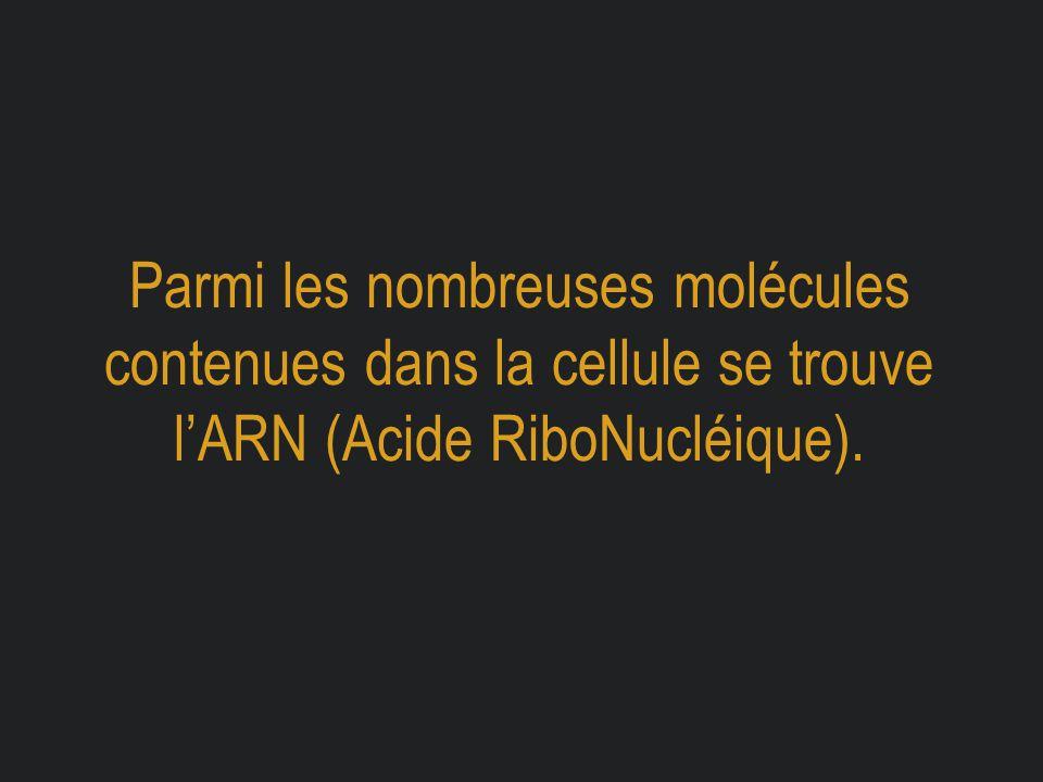 Parmi les nombreuses molécules contenues dans la cellule se trouve l'ARN (Acide RiboNucléique).