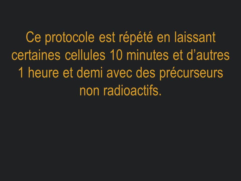 Ce protocole est répété en laissant certaines cellules 10 minutes et d'autres 1 heure et demi avec des précurseurs non radioactifs.