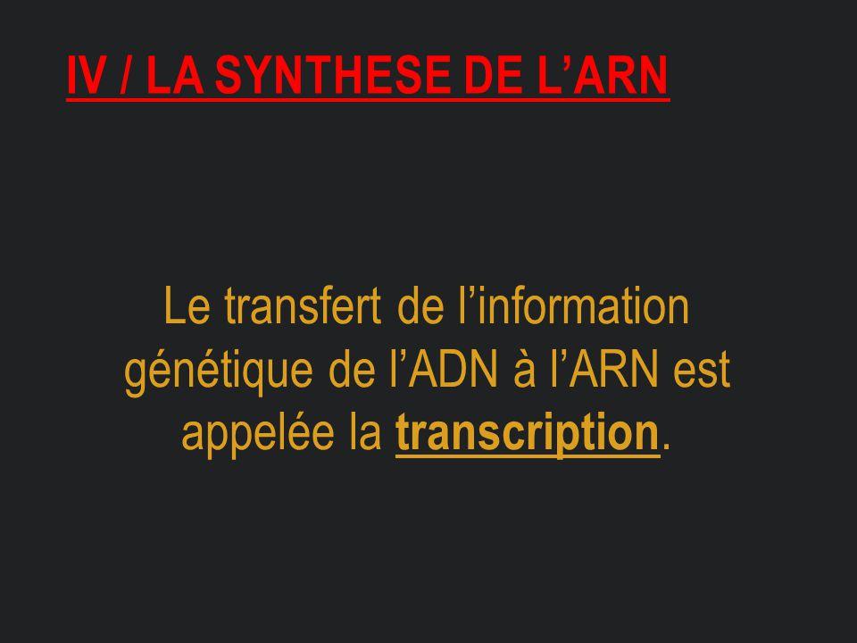 Iv / la synthese de l'arn