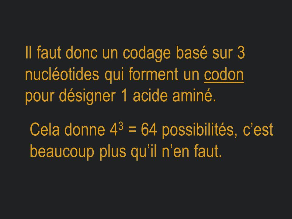 Il faut donc un codage basé sur 3 nucléotides qui forment un codon pour désigner 1 acide aminé.