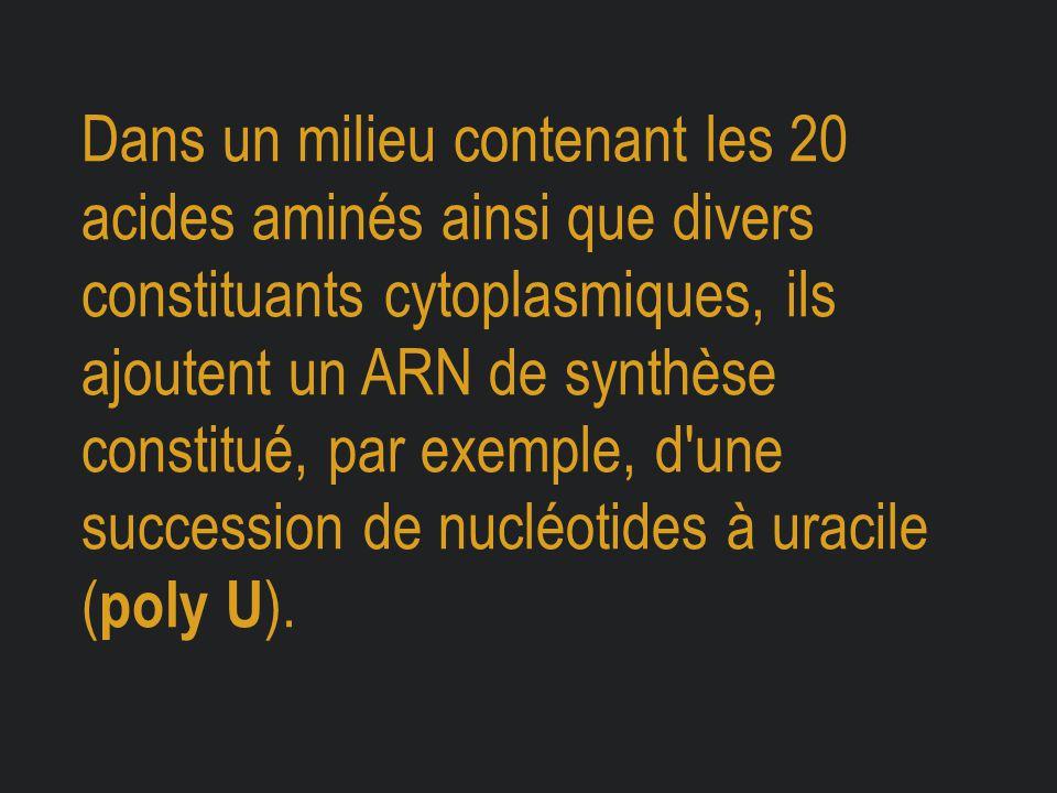 Dans un milieu contenant les 20 acides aminés ainsi que divers constituants cytoplasmiques, ils ajoutent un ARN de synthèse constitué, par exemple, d une succession de nucléotides à uracile (poly U).
