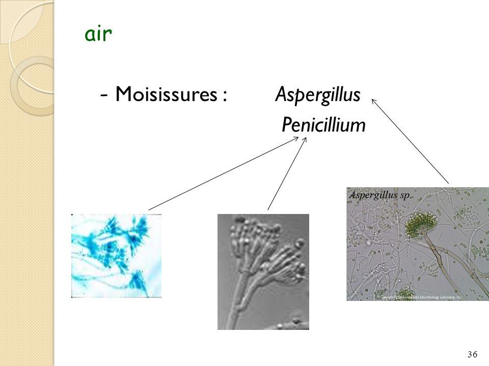 air - Moisissures : Aspergillus Penicillium
