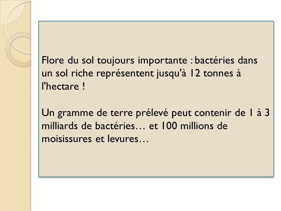 Flore du sol toujours importante : bactéries dans un sol riche représentent jusqu à 12 tonnes à l hectare !