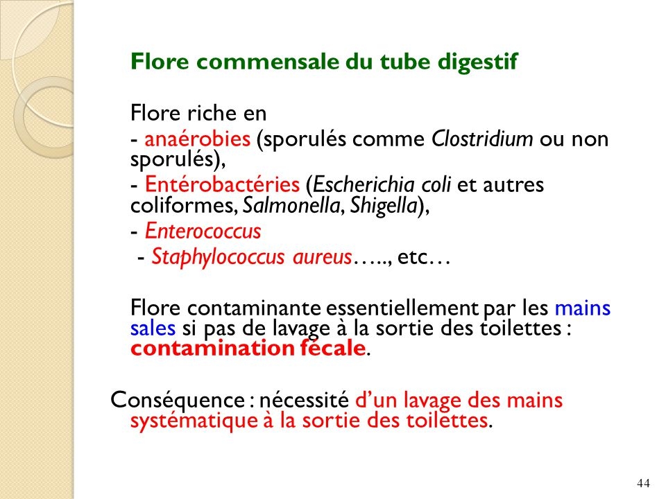 - anaérobies (sporulés comme Clostridium ou non sporulés),