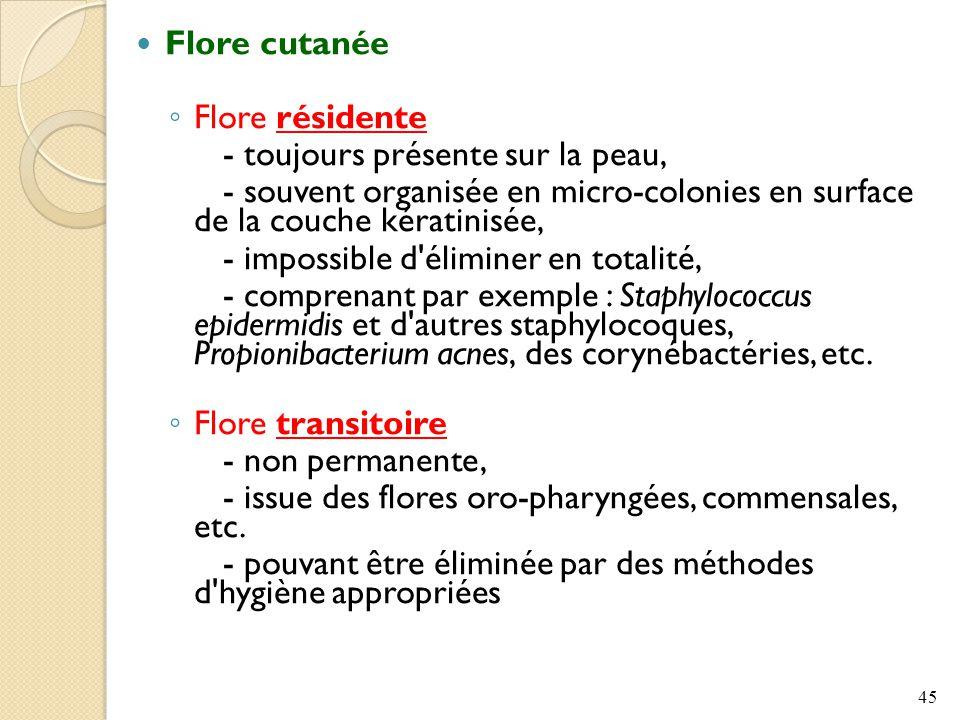 Flore cutanée Flore résidente. - toujours présente sur la peau, - souvent organisée en micro-colonies en surface de la couche kératinisée,