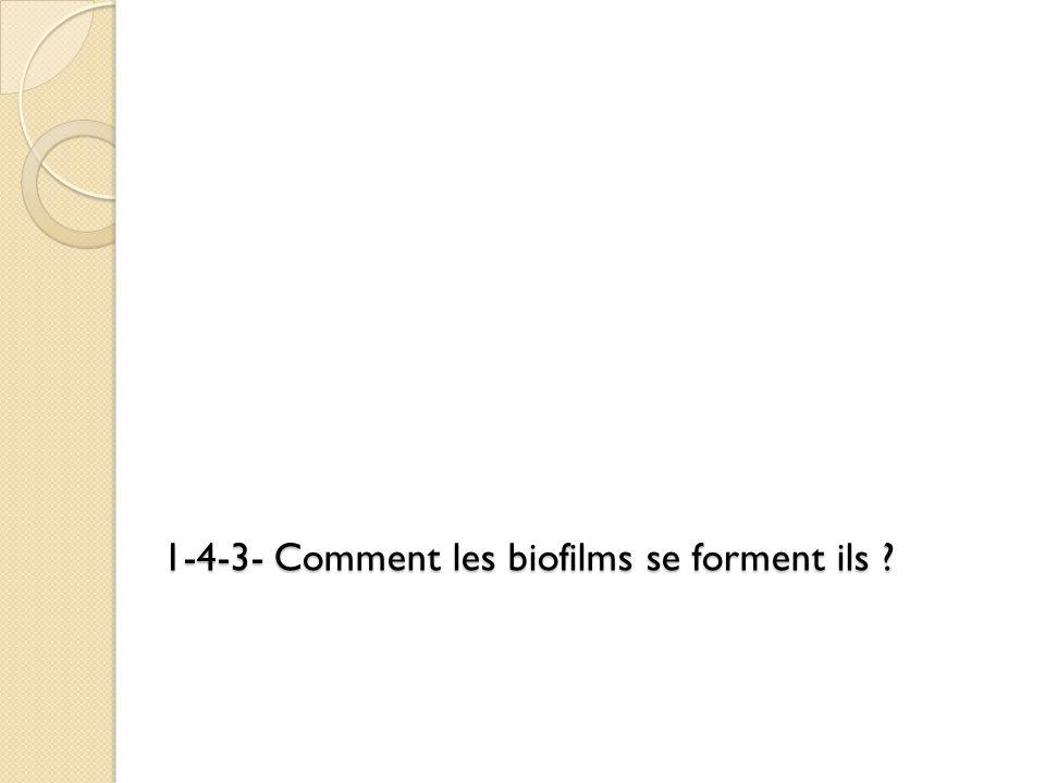 1-4-3- Comment les biofilms se forment ils