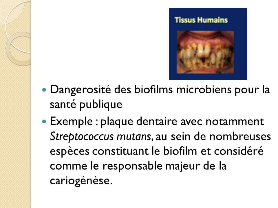 Dangerosité des biofilms microbiens pour la santé publique