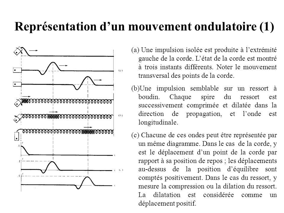 Représentation d'un mouvement ondulatoire (1)