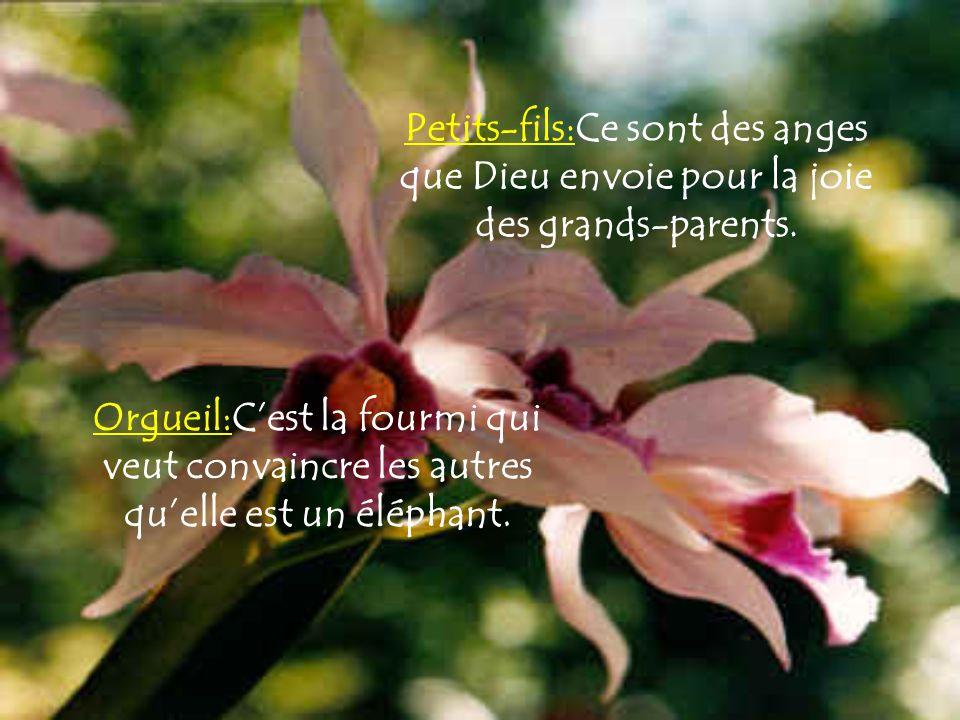 Petits-fils:Ce sont des anges que Dieu envoie pour la joie des grands-parents.