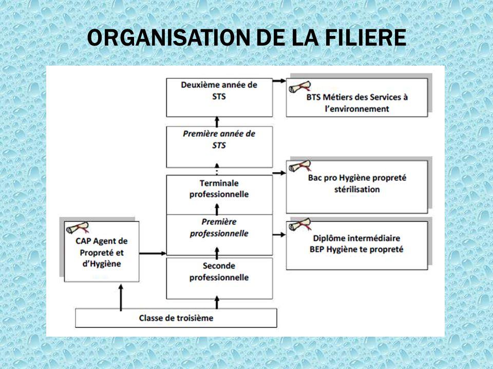 ORGANISATION DE LA FILIERE