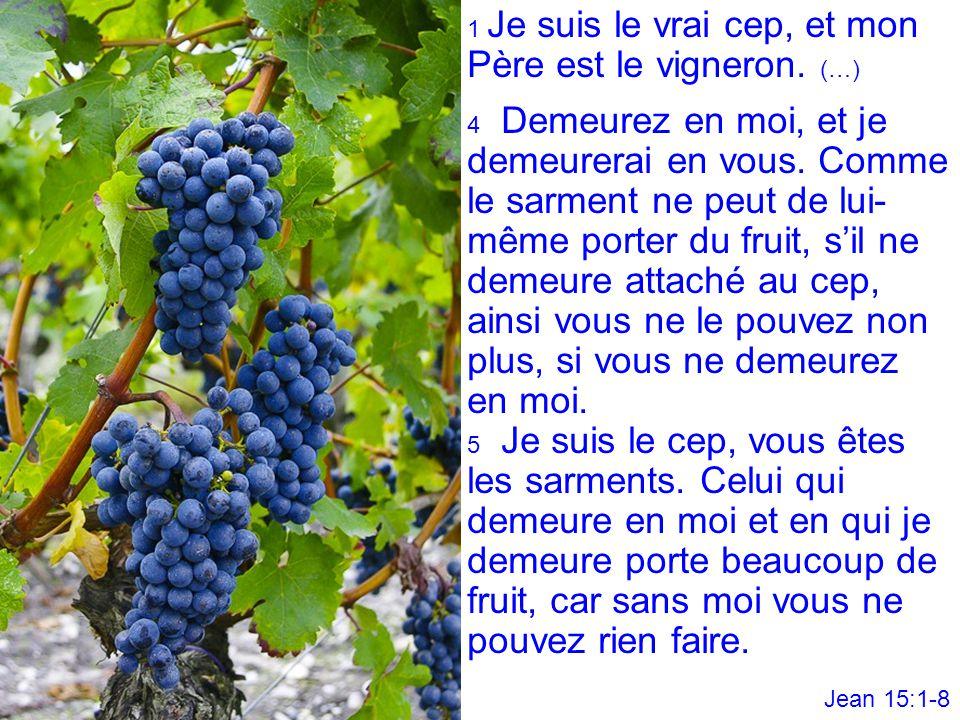 1 Je suis le vrai cep, et mon Père est le vigneron. (…)