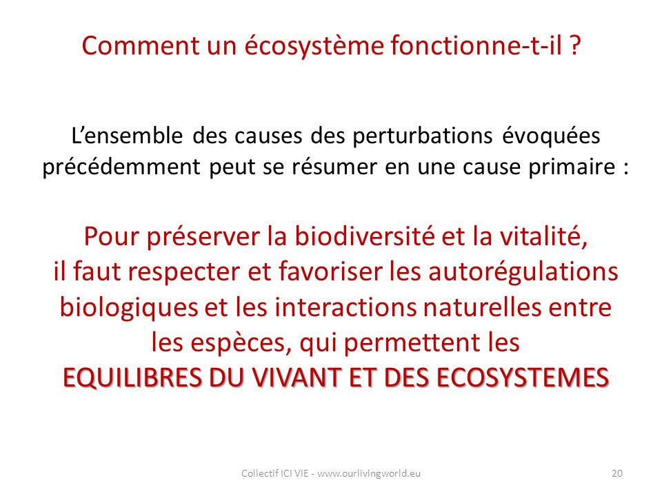 Comment un écosystème fonctionne-t-il