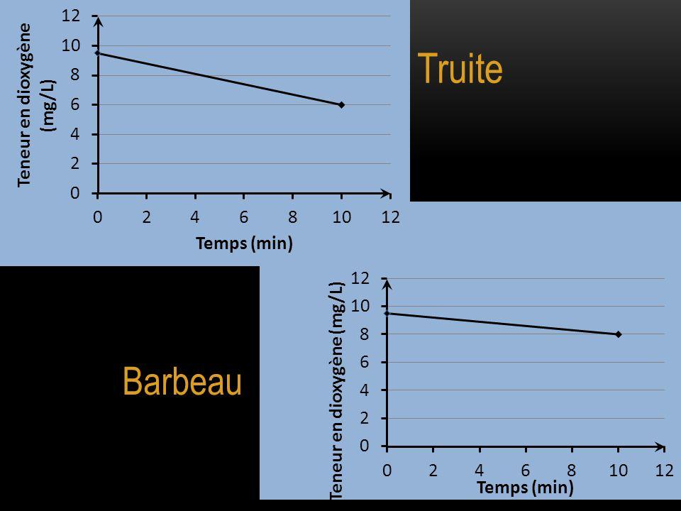Truite Barbeau