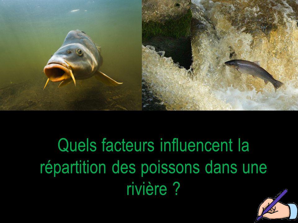 Quels facteurs influencent la répartition des poissons dans une rivière