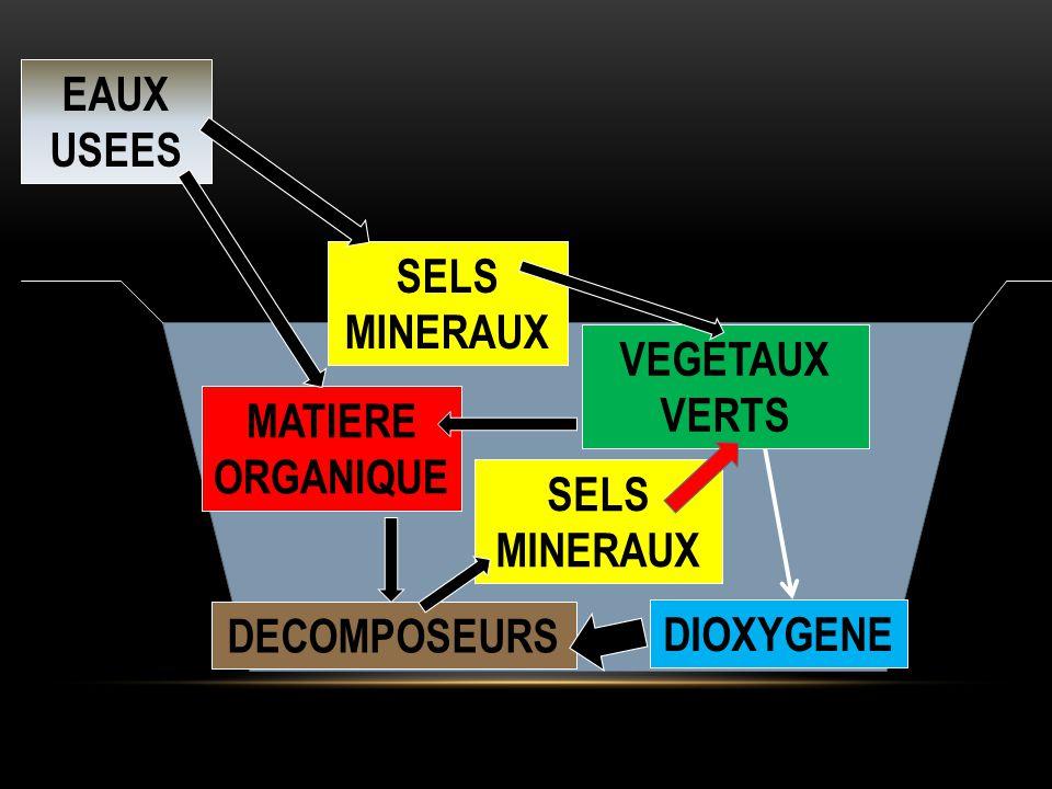EAUX USEES SELS MINERAUX VEGETAUX VERTS MATIERE ORGANIQUE SELS MINERAUX DECOMPOSEURS DIOXYGENE