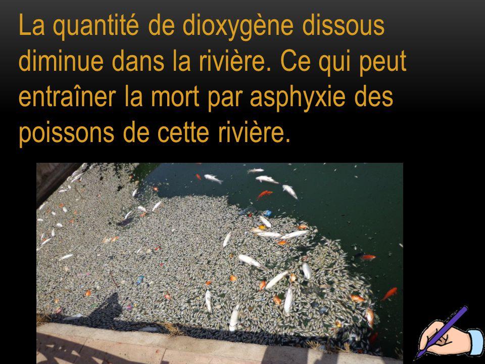 La quantité de dioxygène dissous diminue dans la rivière