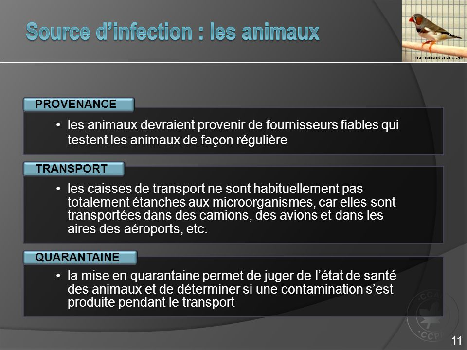 Source d'infection : les animaux