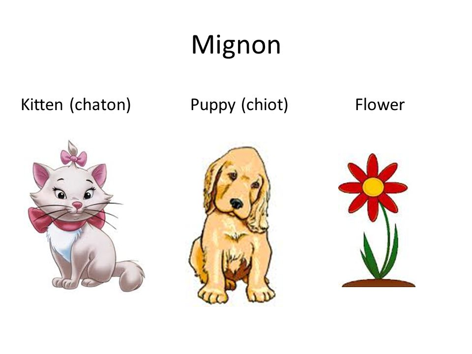 Mignon Kitten (chaton) Puppy (chiot) Flower