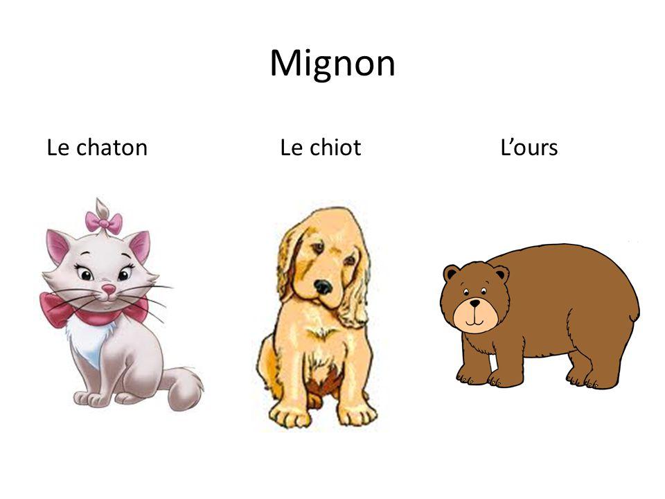 Mignon Le chaton Le chiot L'ours